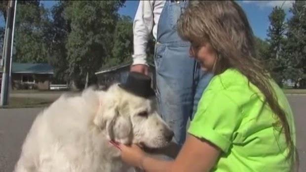 Wali Kota di Kota Ini Adalah Seekor Anjing