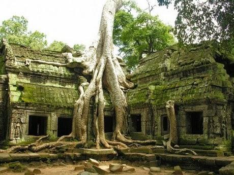 Pohon dari Ta Phrom