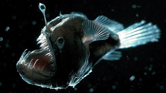 5 Mahluk Penghuni Dasar Laut