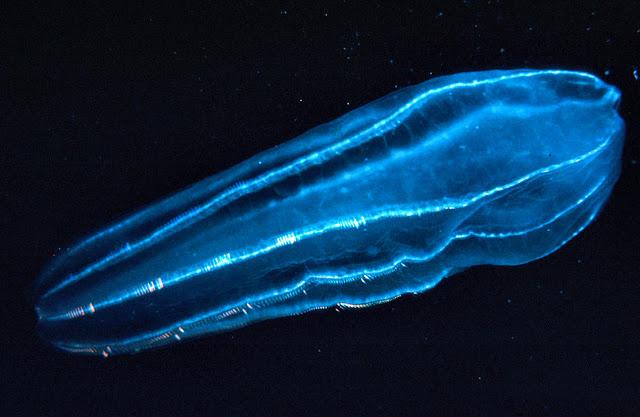 5 Hewan Laut yang Unik dan Menyeramkan