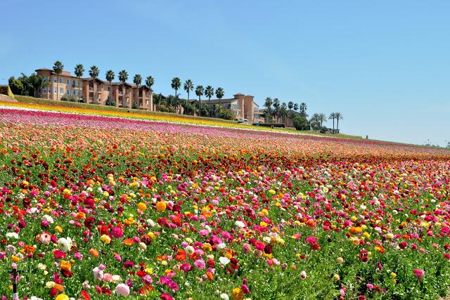 5 Taman Bunga Tercantik Di Dunia, Yang Bakal Bikin Kamu Takjub