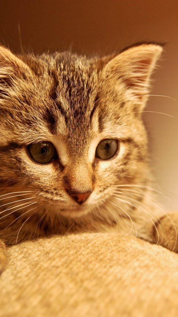 Wallpaper Kucing Lucu WhatsApp
