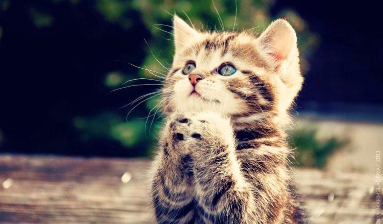 Sesuai Pesan Nabi Muhammad, Jangan Usir Kucing Yang Mendekat Saat Sedang Makan. Ternyata Ini Hikmanya